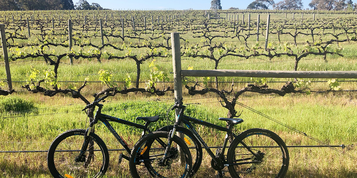 Brew and Wine - Cycle Tour | South West Tours | Adventure Works WA | Margaret River Wine Tours #cycletours #margaretriverwinetours #adventureworks