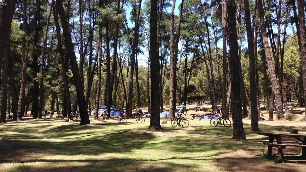 Biking through trees in the forest