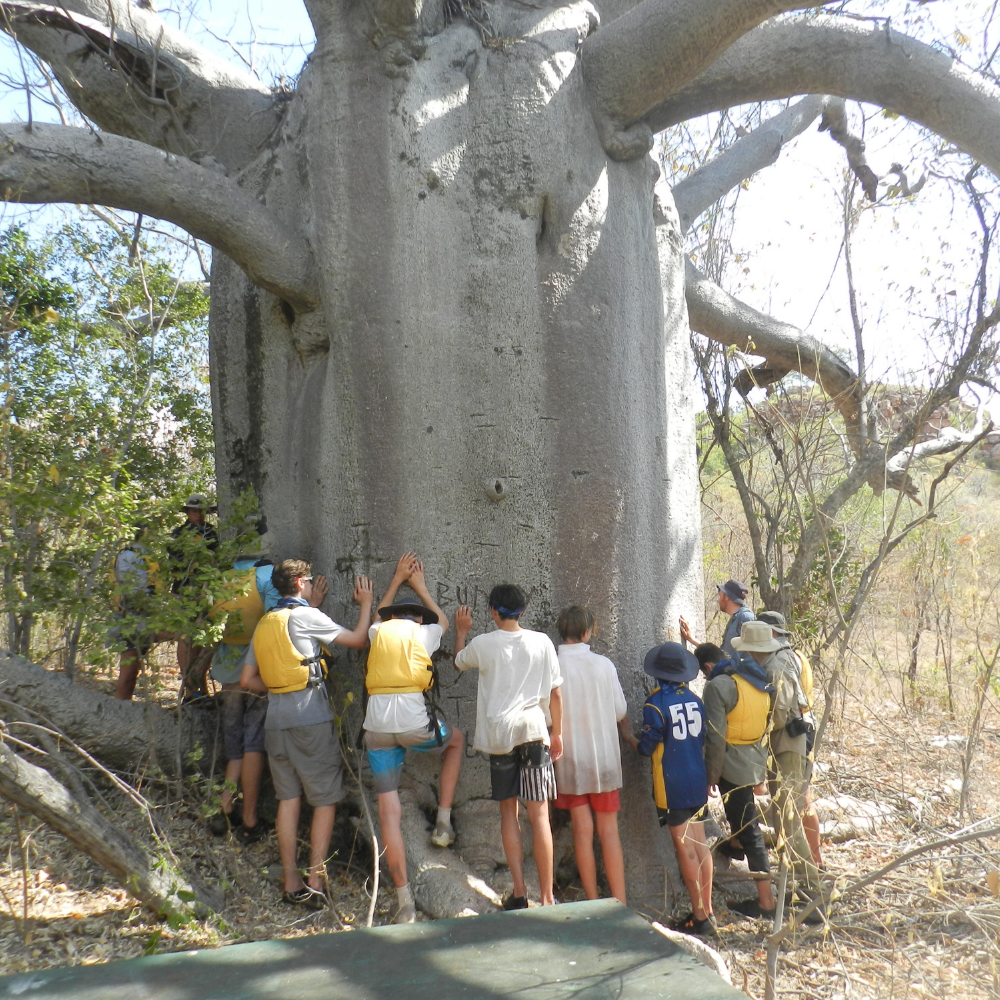 Students standing at the base of a large tree with their arms outstretched touching the tree